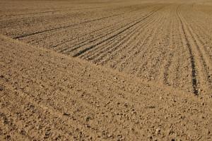 Niemcy: Ceny gruntów rolnych w 2019 r.