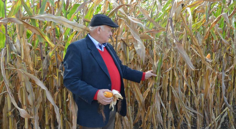 Czy rok 2020 będzie rokiem kukurydzy?