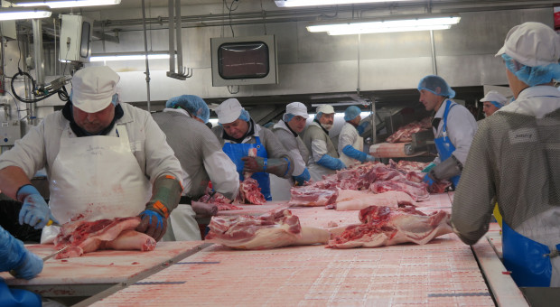 Branża mięsna wpotrzasku COVID-19 i ASF