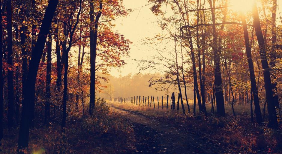 Od nowego roku leśnictwo pod nadzorem resortu rolnictwa