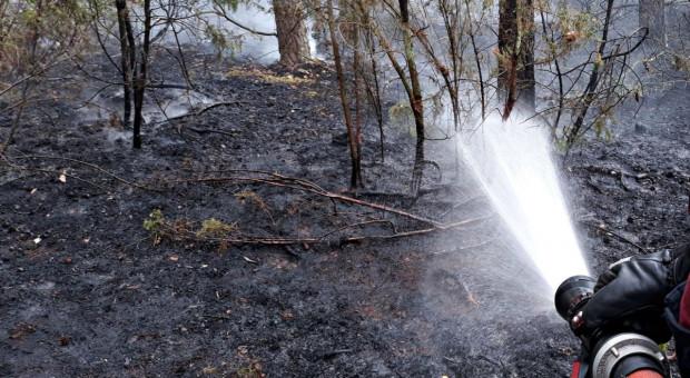 W tym roku w lasach wybuchło prawie 3 tys. mniej pożarów niż w 2019 r.