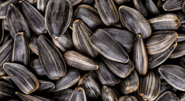 USDA: Obniżka światowej prognozy produkcji nasion oleistych