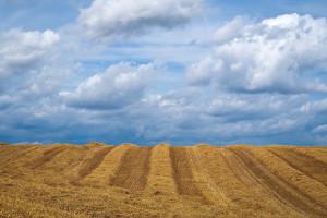 Rosja chce odzyskać 6 milionów hektarów ziemi uprawnej