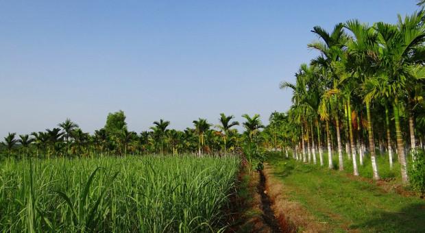 Australia: Pakiet pomocy dla rolnictwa