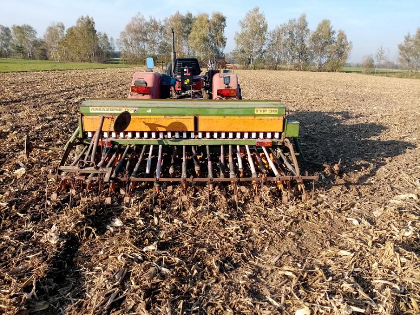 """Rolnik dosiewu zbóż używa klasycznego siewnika naredlicy stopkowej, który radzi sobie zsiewem nawet w""""bałaganie"""" pozostającym pozbiorze kukurydzy naziarno"""