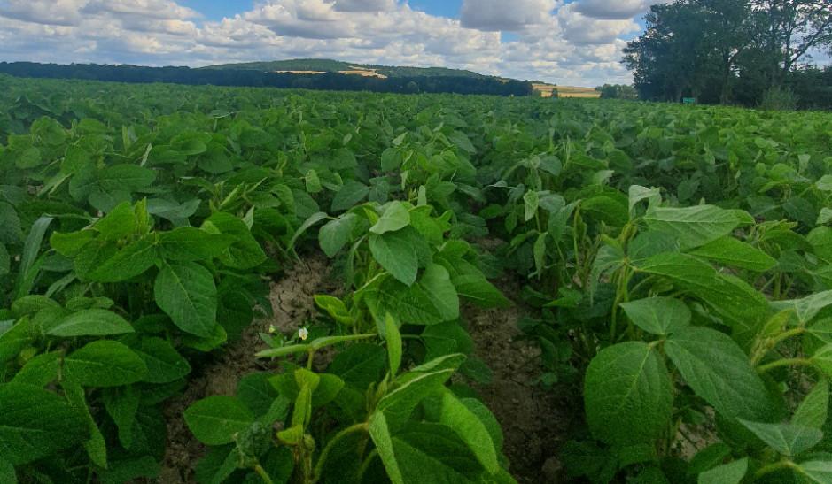 Pierwszą rośliną uprawianą ekologicznie wgospodarstwie była soja, głównie dlatego, żełatwą jąopielić mechanicznie