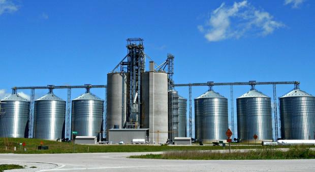 Giełdy krajowe: Ceny zbóż rosną