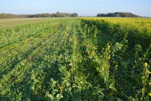 Narodowe Wyzwania w Rolnictwie OnLine: Ważny płodozmian i próchnica