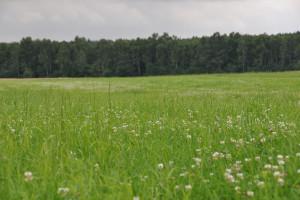Jesienne nawożenie łąk i pastwisk