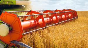 Kolejne szczyty notowań zbóż na światowych giełdach