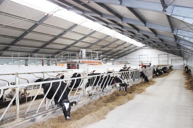Krowy w dobrym klimacie