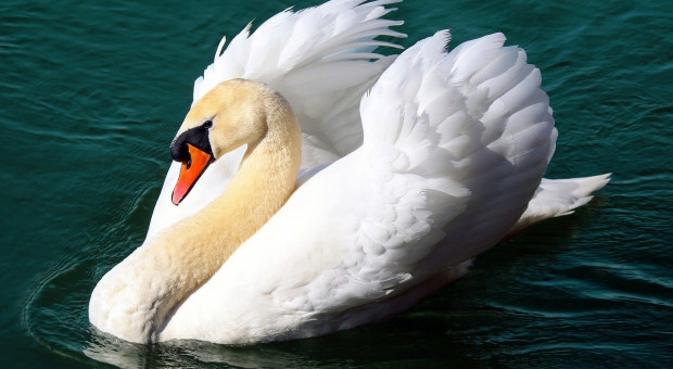 Dwa przypadki grypy ptaków w Niderlandach