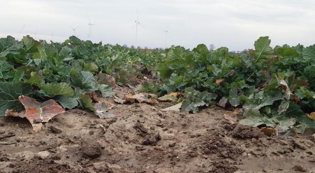 Narodowe Wyzwania w Rolnictwie OnLine: Wybór gatunku i odmiany a nawożenie
