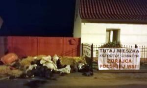 Policja bada sprawę zanieczyszczenia chodnika i wywieszenia transparentu przed domem posła K. Czarneckiego