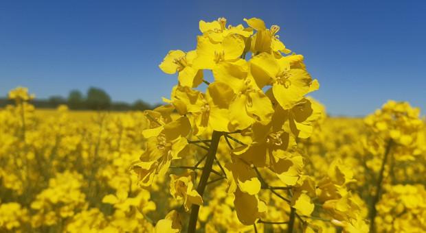 NWwR OnLine: Hodowla roślin także odpowiada na zmiany klimatu