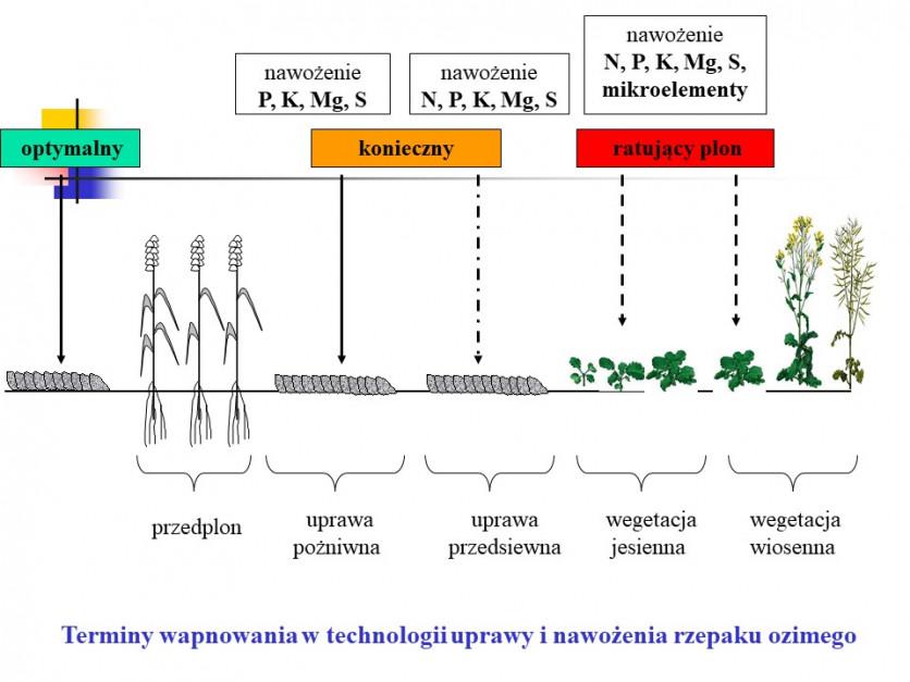 grafika: W. Szczepaniak