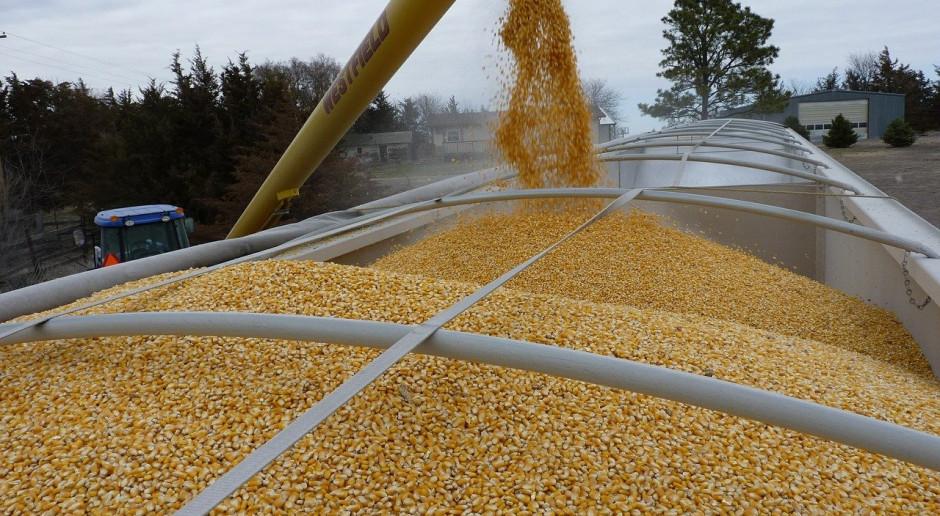 Obniżka prognozy produkcji ukraińskiej kukurydzy