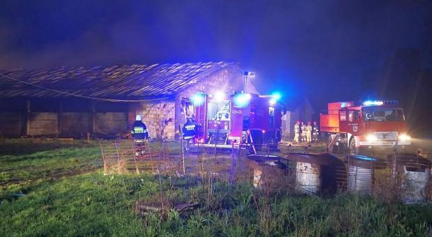 Pożar na fermie drobiarskiej - milionowe straty