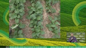 Efekty pracy agregatu na przykładzie siewu rzepaku po pszenicy. Priorytetem jest, aby resztki pożniwne były na wierzchu gdyż działają one ochronnie na glebę: chronią przed promieniami słonecznymi oraz przed intensywnymi opadami. fot. Farmer