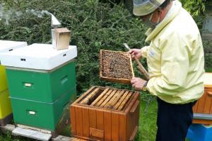ARiMR oferuje nowe, istotne wsparcie dla pszczelarzy