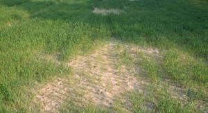 Odczyn gleby – punkt wyjścia w strategii nawożenia