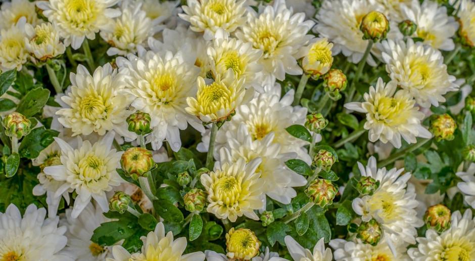Semeniuk o rekompensacie za niesprzedane kwiaty