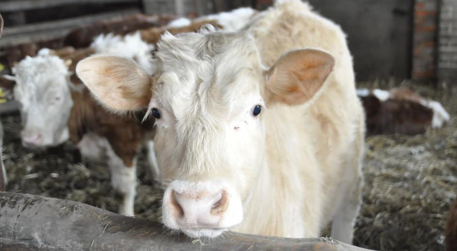 Wojciechowski: Zakaz hodowli futerkowych i uboju bez ogłuszania to decyzja polityczna