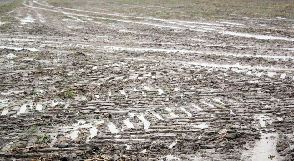 Grząsko na polach – utrudnione zbiory kukurydzy i buraka