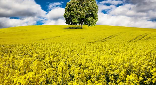 Pasze GMO do końca 2023?