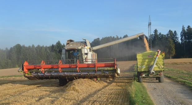 Zbiory zbóż na Ukrainie sięgają 55 mln ton