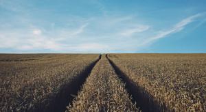 Są stawki dopłat do nasion