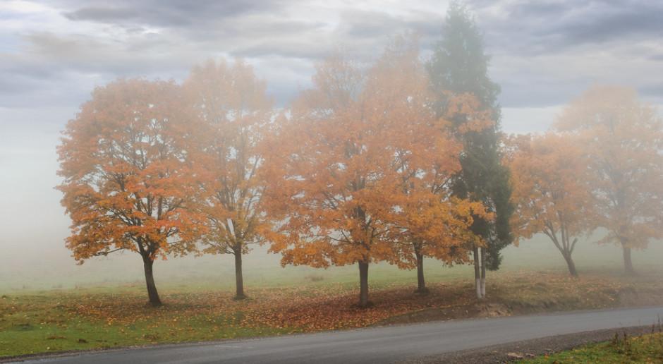 Prognoza pogody na 11 i 12 listopada
