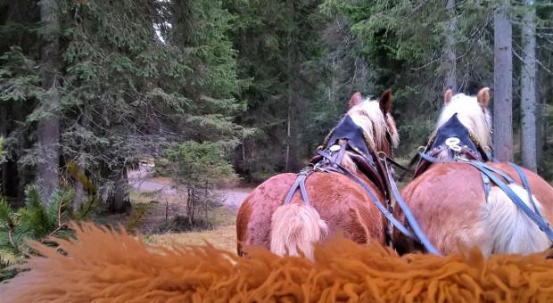 Woźnica pijany - zaprzęgiem kierował koń