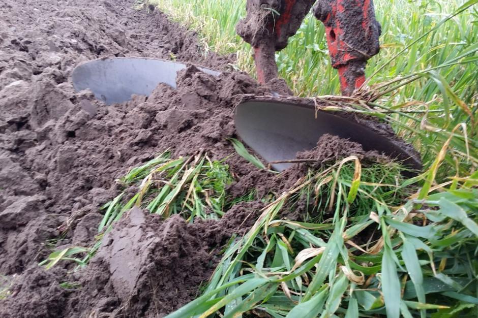 Przedpłużek aby spełniał swoje zadanie, musi pracować w ziemi na głębokości minimum 5 cm, fot.kh