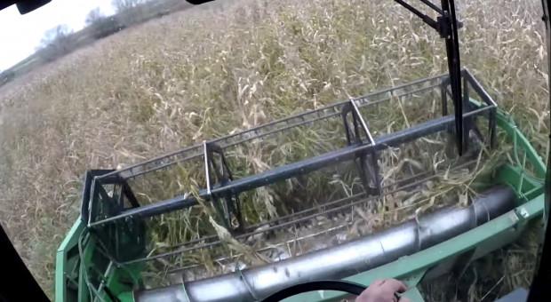 Czy da się skosić kukurydzę kombajnem z hederem zbożowym?