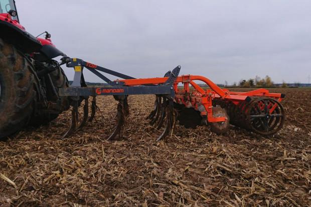 Mandam Top 3,0 w głębokiej uprawie po kukurydzy
