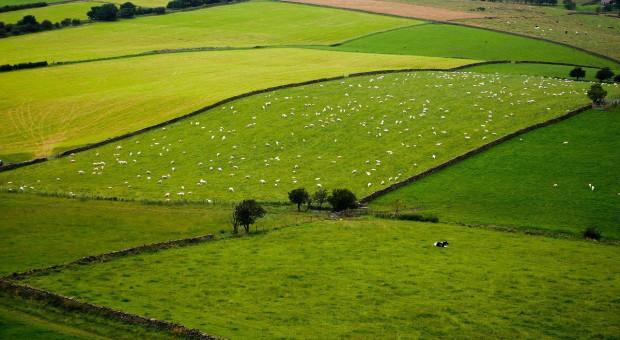 Polityka rolna: Brytyjczycy idą własną drogą