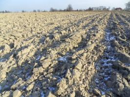 Wątpliwe jest nadejście silnych mrozów, które rozsadziłyby bryły powstałe poorce, brakuje też obfitych opadów śniegu. Dlatego przy takim sposobie uprawy podczas słonecznych dni gleba jest narażona naszybką utratę wody; Fot. Katarzyna Szulc
