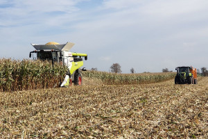 Kukurydza z plonem ziarna ponad 17 ton z ha
