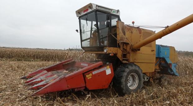 Kosimy kukurydzę Bizonem z przystawką PCA Geringhoff