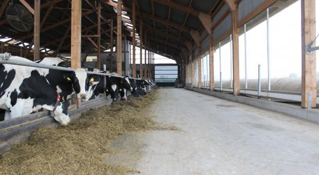 Jak inwestować w produkcję mleka i nie żałować?