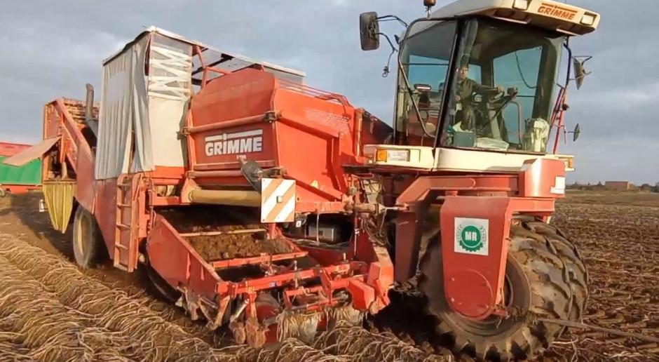 Farmer na wykopkach - kombajn Grimme SF 150-60 w akcji