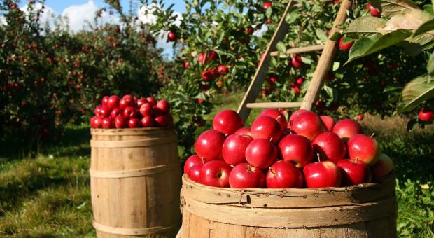 Rosja: Spodziewany jest milion ton owoców