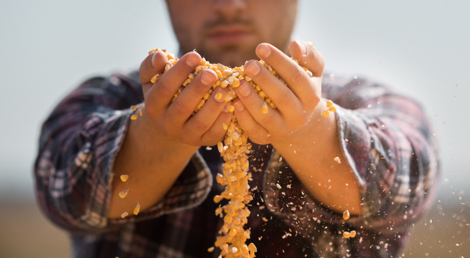 W handlu zbożem listopad poprawia statystyki