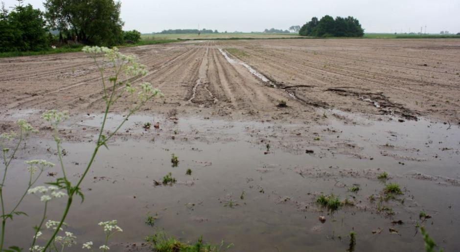 Niejasne wymogi w kwestii ubezpieczenia upraw
