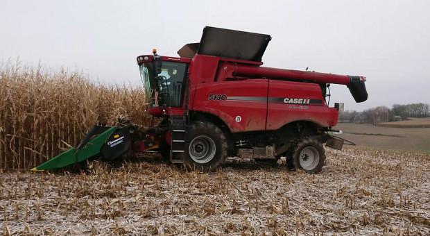 Case IH Axial Flow 5130 w kukurydzy!