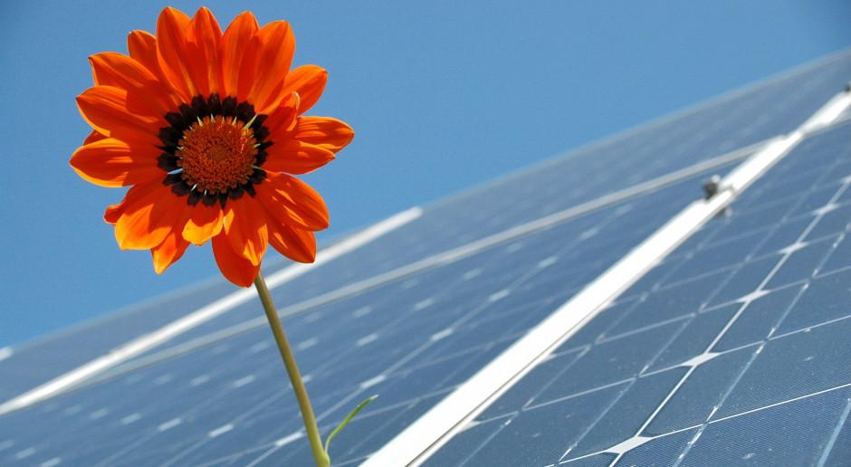 Czy gorączka słoneczna rozpaliła rolników do inwestowania w fotowoltaikę?