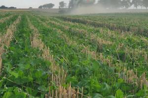Rolnictwo i ekologia, czy można to połączyć?
