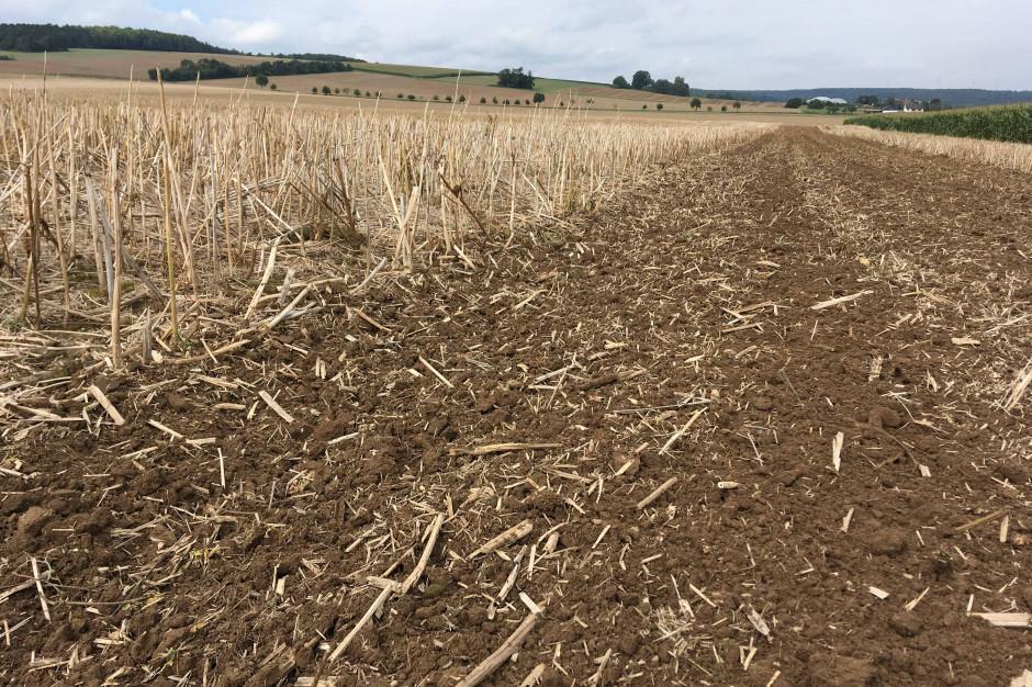 Po przejeździe agregatu wyposażonego wtalerze CrossCutter Disc na powierzchni pola zalega dużo resztek organicznych, agleba jest podcięta na całej szerokości pracy agregatu
