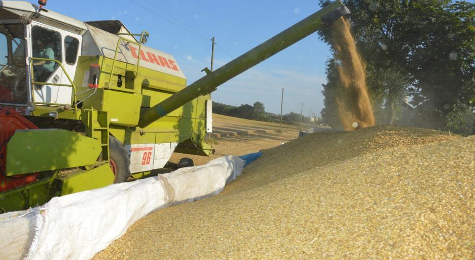 Rosja: Oczekuje również dużych zbiorów zbóż w 2021 roku
